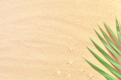Tropical Background. Palm tree branch with starfish on sandy background. Travel. Copy space. Stock Images