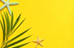 Tropical Background. Palm tree branch with starfish on yellow background. Travel. Stock Image