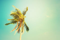 Tropical Background Palm Tree Holiday Travel Stock Image