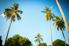 Tropical Background Palm Tree Holiday Travel Stock Images