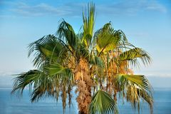 Tropical Background. Royalty Free Stock Photos