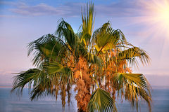 Tropical Background. Stock Photo