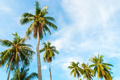 Tropical Background Palm Tree Sun Light Holiday Stock Photo