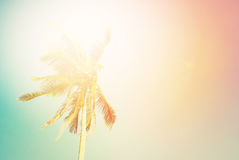 Tropical Background Palm Tree Sun Light Holiday Stock Image