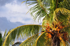 Tropical background Royalty Free Stock Photo