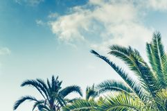 Tropical background of palm trees against blue sky Royalty Free Stock Images