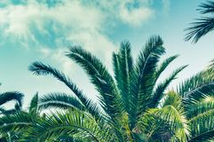 Tropical background of palm trees against blue sky Royalty Free Stock Photo