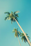 Tropical  background with palm trees in sun light. Travel design Stock Images
