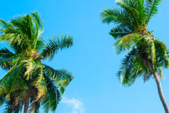 Tropical background with palm trees. Travel design Royalty Free Stock Images