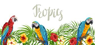 Tropical background with parrots. Palm leaves, hibiscus flowers and exotic birds vector illustration