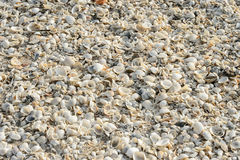 Tropical background with sea shells Stock Images
