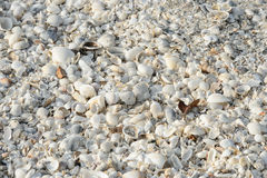 Tropical background with sea shells Stock Photo