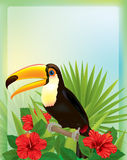 Tropical background with toucan Stock Images