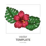 Tropical background with tropical leaves and flowers. Exotic Royalty Free Stock Image