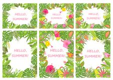 Tropical backgrounds for summer holiday Stock Images