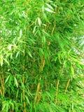 Tropical bamboo background Stock Photos