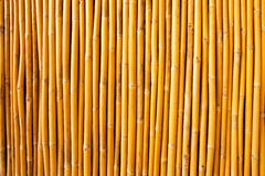 Tropical bamboo fence Stock Photography