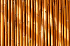Tropical bamboo fence Stock Photos