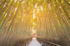 Tropical bamboo forest with walking path. Arashiyama Kyoto Japan natural landscape background stock photo