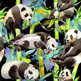 Tropical  bamboo tree and panda pattern in a watercolor style. Aquarelle wild bamboo tree and panda for background, texture, wrapper pattern, frame or border Royalty Free Stock Photography