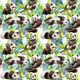 Tropical  bamboo tree and panda pattern in a watercolor style. Aquarelle wild bamboo tree and panda for background, texture, wrapper pattern, frame or border Royalty Free Stock Images