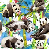 Tropical  bamboo tree and panda pattern in a watercolor style. Aquarelle wild bamboo tree and panda for background, texture, wrapper pattern, frame or border Stock Photography