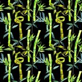 Tropical  bamboo tree pattern in a watercolor style. Aquarelle wild bamboo tree for background, texture, wrapper pattern, frame or border Stock Photo