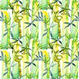 Tropical  bamboo tree pattern in a watercolor style. Aquarelle wild bamboo tree for background, texture, wrapper pattern, frame or border Stock Images