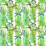Tropical  bamboo tree pattern in a watercolor style. Royalty Free Stock Images