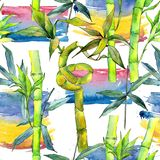 Tropical  bamboo tree pattern in a watercolor style. Aquarelle wild bamboo tree for background, texture, wrapper pattern, frame or border Royalty Free Stock Image