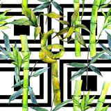 Tropical  bamboo tree pattern in a watercolor style. Aquarelle wild bamboo tree for background, texture, wrapper pattern, frame or border Royalty Free Stock Photography