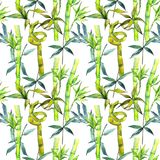 Tropical  bamboo tree pattern in a watercolor style. Aquarelle wild bamboo tree for background, texture, wrapper pattern, frame or border Stock Photography