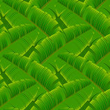 Tropical banana leaves seamless pattern Stock Images