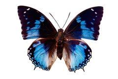 Tropical batterfly aislado en blanco Foto de archivo