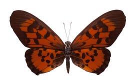 Tropical batterfly aislado en blanco Imagen de archivo libre de regalías