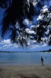 Tropical Beach. With tree stock image