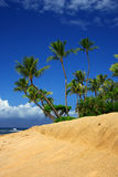 Tropical beach. With palm trees, sand and foreground copyspace in Maui, Hawaii Royalty Free Stock Photography