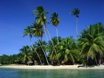 Tropical beach. A tropical beach with clear water Stock Photography