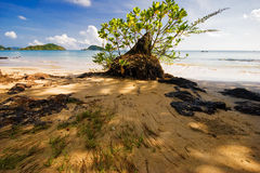 On the tropical beach Royalty Free Stock Photo