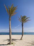 Tropical Beach. Summer image of a tropical beach with two palm trees in the sand. Photo taken in a beautiful sunny day Royalty Free Stock Photo