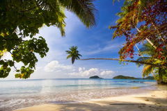 On the tropical beach Royalty Free Stock Image