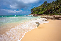 On the tropical beach Stock Photography