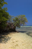 Tropical beach. On the Togians Islands (Indonesia Stock Photography