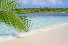 Tropical beach. View of nice tropical empty sandy beach with some palm leaves stock image