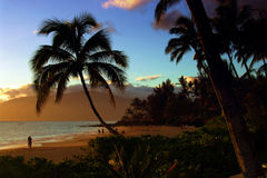 Tropical beach. A Tropical beach in Hawaii Royalty Free Stock Photography