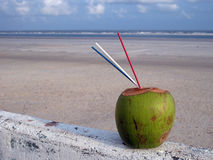 Tropical beach. With coconut on the pier - Brazil Stock Images
