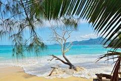 Tropical beach. Tropical sandy beach on Seychelles islands. Mahe, Anse Soleil Stock Image