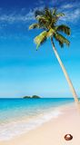 Tropical beach. With palm tree and azure water Royalty Free Stock Photos