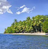 Tropical beach. With coconut palm trees. Flores Island, Indonesia stock image