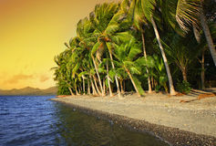 Tropical beach. With coconut palm trees. Flores Island, Indonesia Royalty Free Stock Photography